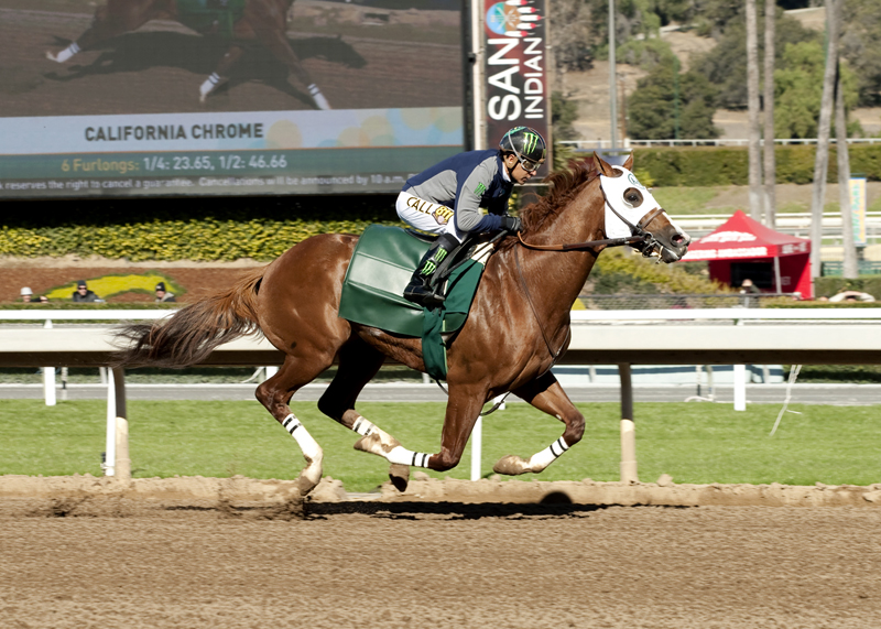 In his final work in preparation for Santa AnitaÕs Grade II, 1 1/16 miles San Pasqual Stakes on Jan. 9, reigning Horse of the Year California Chrome, who was fitted with blinkers, worked a snappy six furlongs in 1:10.04 under Victor Espinoza prior to todayÕs (Saturday,Jan. 2, 2016) first race at Santa Anita Park, Arcadia, CA.Benoit Photo