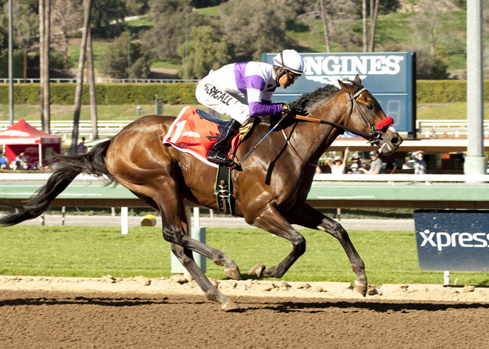 Reddam Racing's Nyquist and jockey Mario Gutierrez win the Grade II $200,000 San Vicente Stakes Monday, February 15, 2016 at Santa Anita Park, Arcadia CA.© BENOIT PHOTO