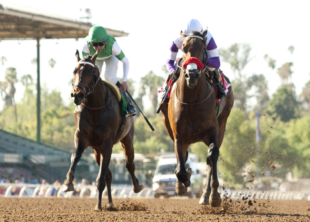 Reddam Racing's Nyquist and jockey Mario Gutierrez, right, outleg Exaggerator (Kent Desormeaux), left, to win the Grade II $200,000 San Vicente Stakes Monday, February 15, 2016 at Santa Anita Park, Arcadia CA.© BENOIT PHOTO