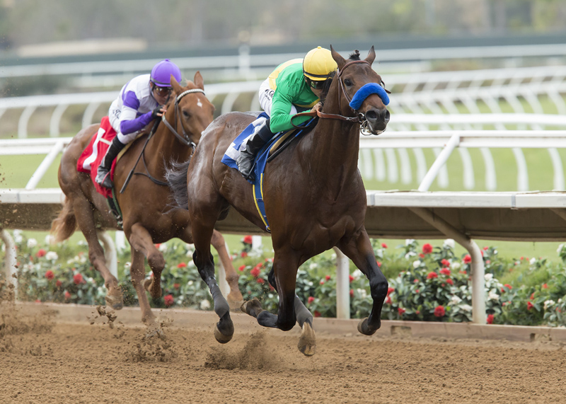 Cheyenne Stable's Mastery and jockey Mike Smith, right, ouutleg Ann Arbor Eddie (Mario Gutierrez), left, to win the Grade III, $100,000 Bob Hope Stakes, Saturday, November 19, 2016 at Del Mar Thoroughbred Club, Del Mar CA © BENOIT PHOTO