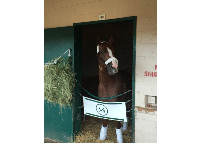 11. California Chrome is one of my all-time favorites. I got to feed him a peppermint and saw him flat put on a show in the 2016 Pacific Classic at Del Mar. Now that is a daily double!