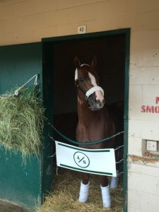 11 California Chrome is one of my all-time favorites. I got to feed him a peppermint and saw him flat put on a show in the 2016 Pacific Classic at Del Mar. Now that is a daily double!