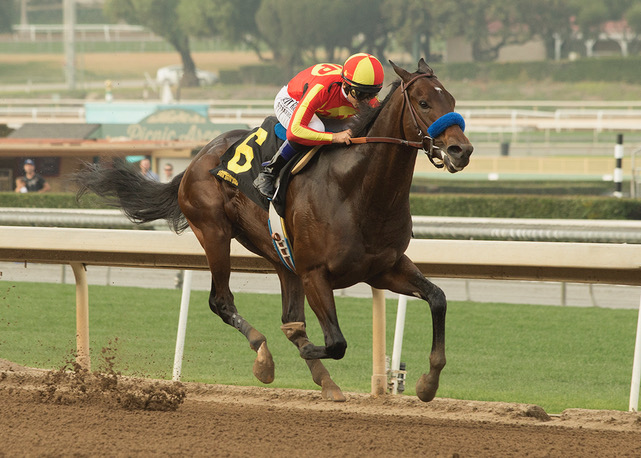 MCKINZIE SAW IT IN THE SHAM STAKES